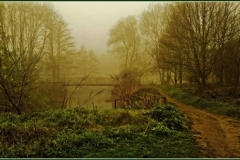 Eirie Wood by David Speight