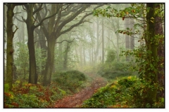 Notton Woods by David Speight