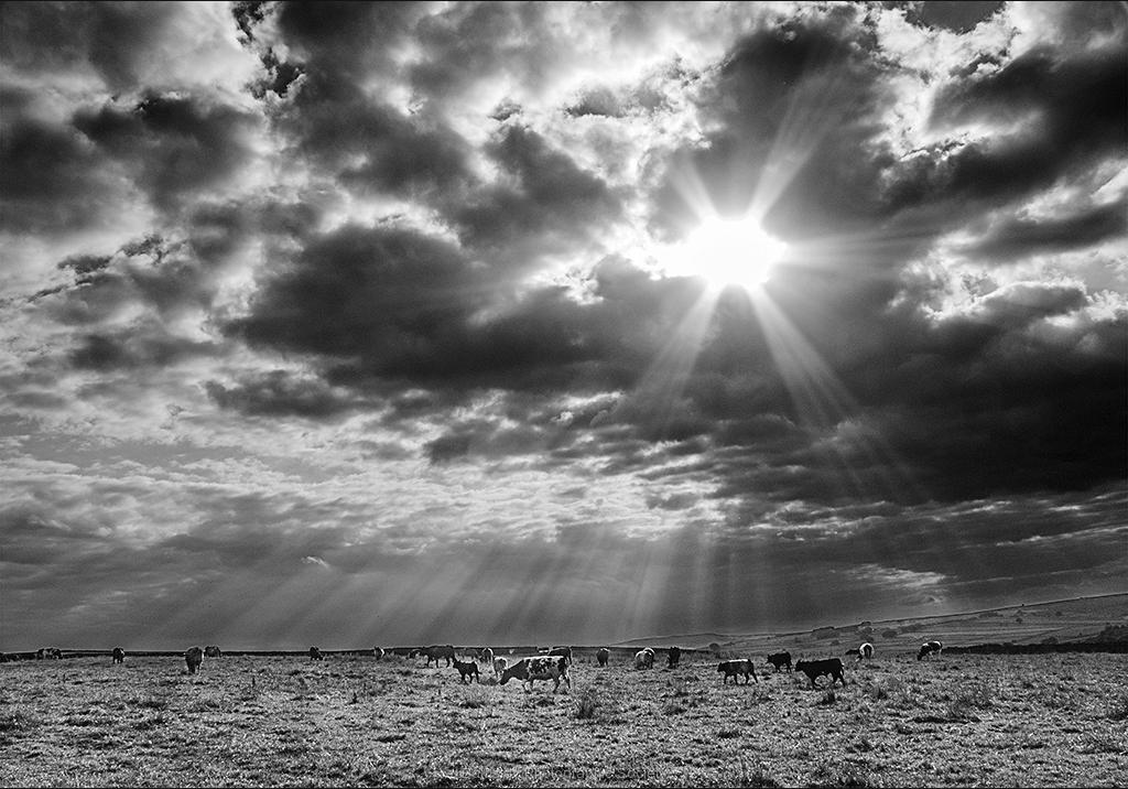 Sunlight Rays by Bob Harper