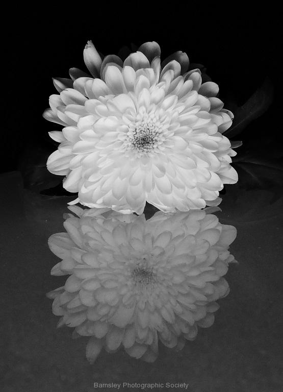 Single Flower by Paul Coverdale