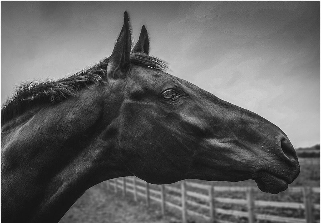 Horses Head by Bob Harper