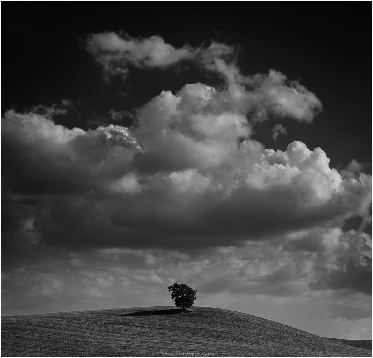 Singular Tree by Jeff Moore