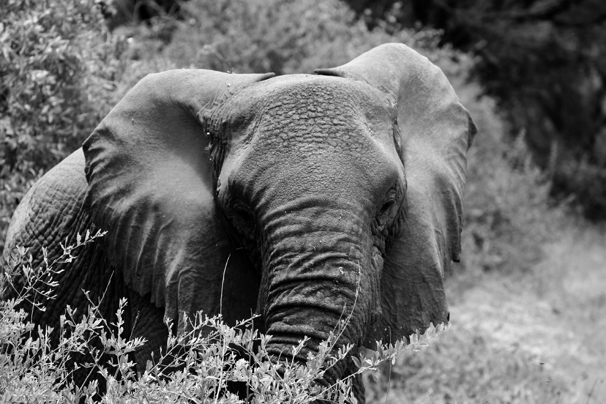 Baby Elephant by Correen Cetinturk