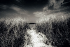 Path to the Sea by Jeff Moore