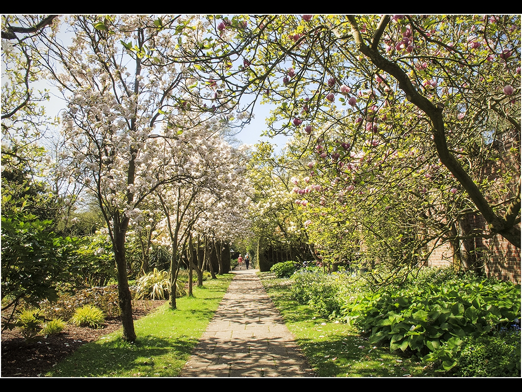 TREE BLOSSOM WALK By Bob Harper