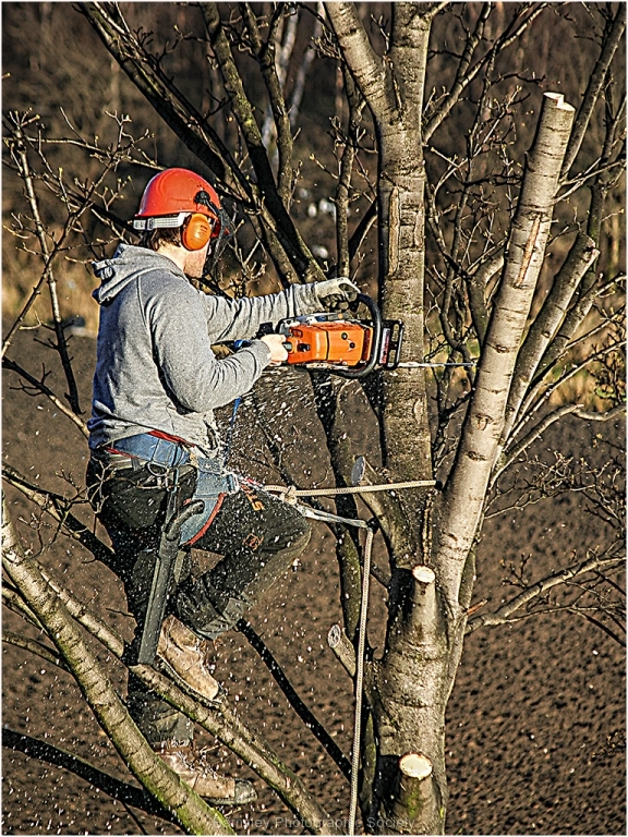 TREE SURGEON by BOB HARPER