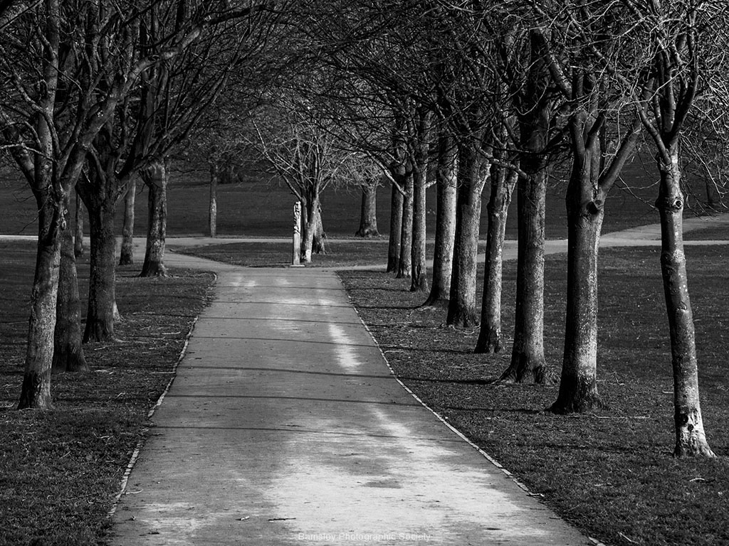 AVENUE WITH TREES by Brian Johnson