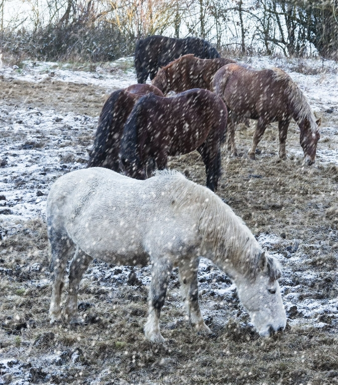 HORSES-IN-SNOW-by-Brian-Johnson