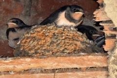 NESTING BIRDS by Glyn Tattersall