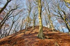 Bradfield-Wood