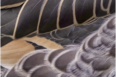 DUCK-FEATHERS-DETAIL-by-Jeff-Moore