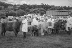 Ripley Cattle Show by Bob Harper