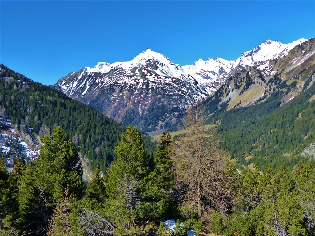 Alpine View by Ray Evans