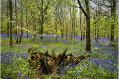 Woodland Spring Time by Bob Harper