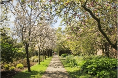 Tree Blossom Walk by Bob Harper
