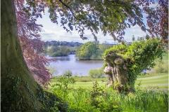 Lakeside View by Bob Harper