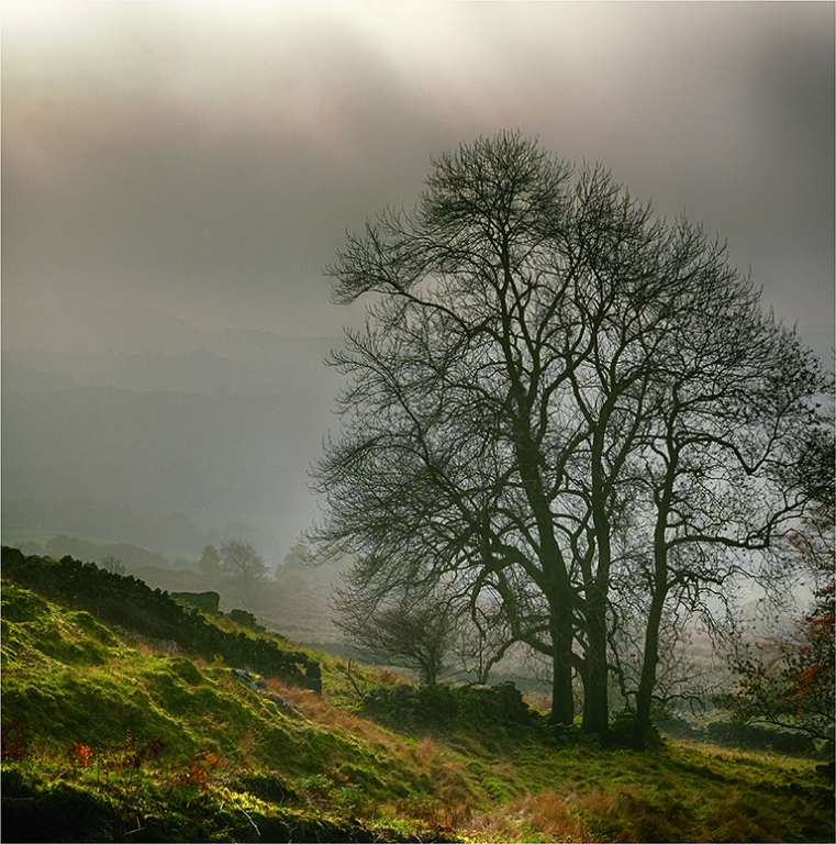 Tree in the Morning Mist by Jeff Moore