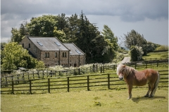 Pasture Grassland by Bob Harper