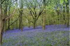 Wonder of Spring by Bob Harper