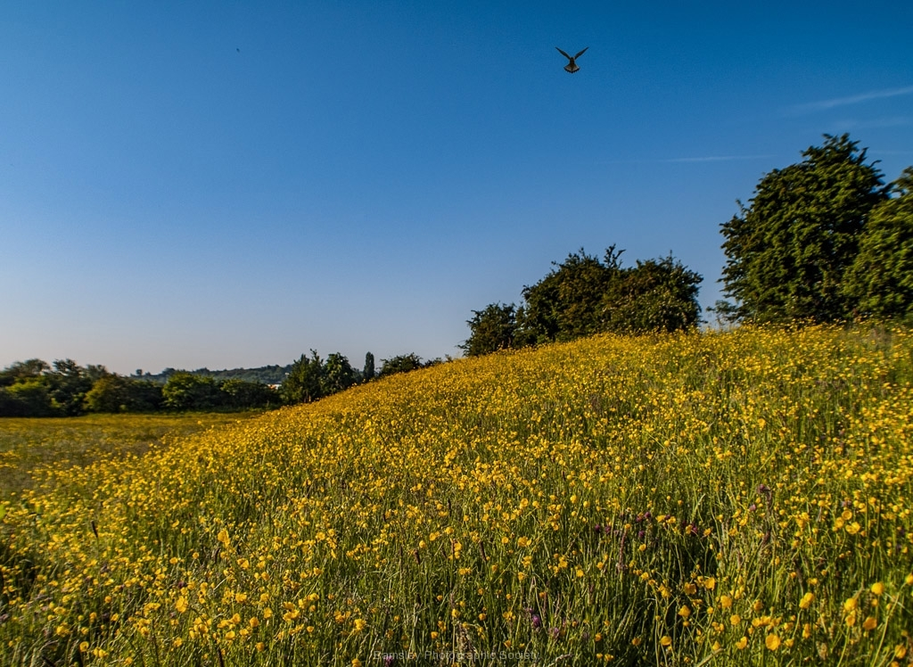 Breakfast at Buttercup Hill by Brian Johnson