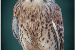 Falcon by Bob Harper