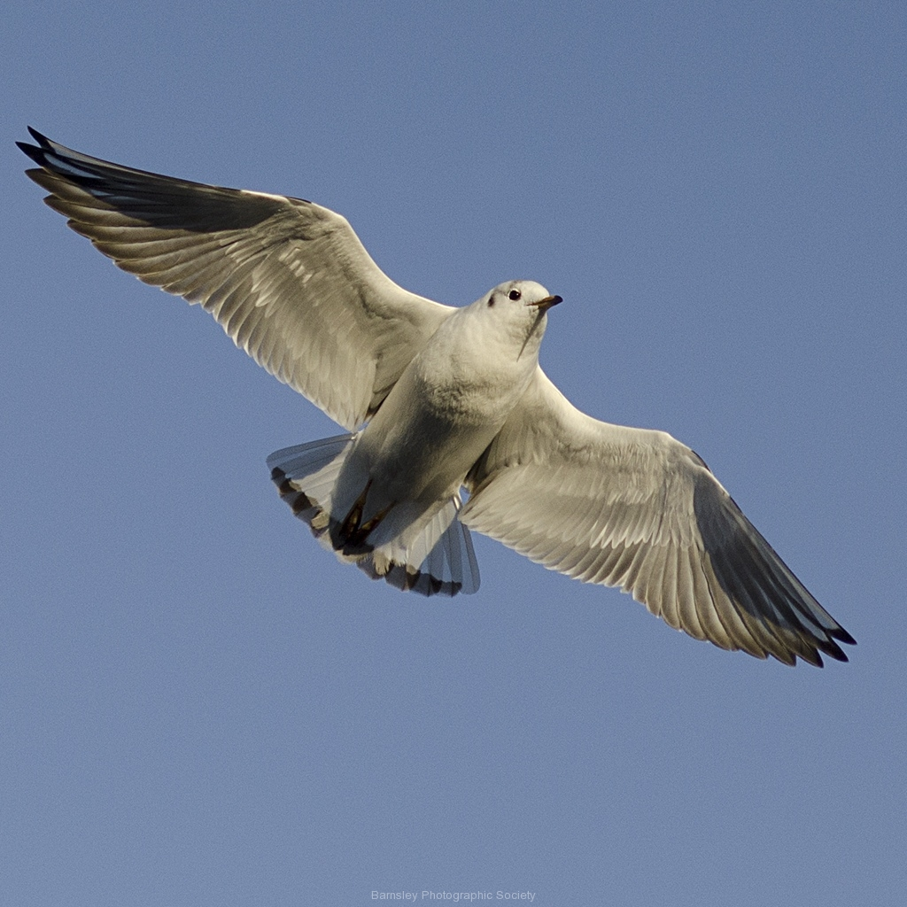 Gull by Jeff Moore