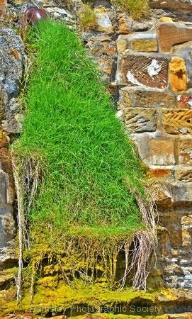 Grassfall by Roy Lloyd