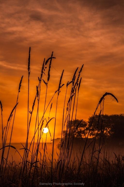 Misty Morning by Phil Edwards