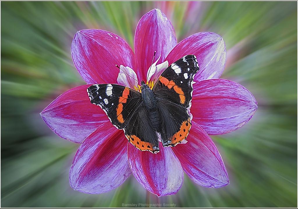 Wonder of Nature by Bob Harper