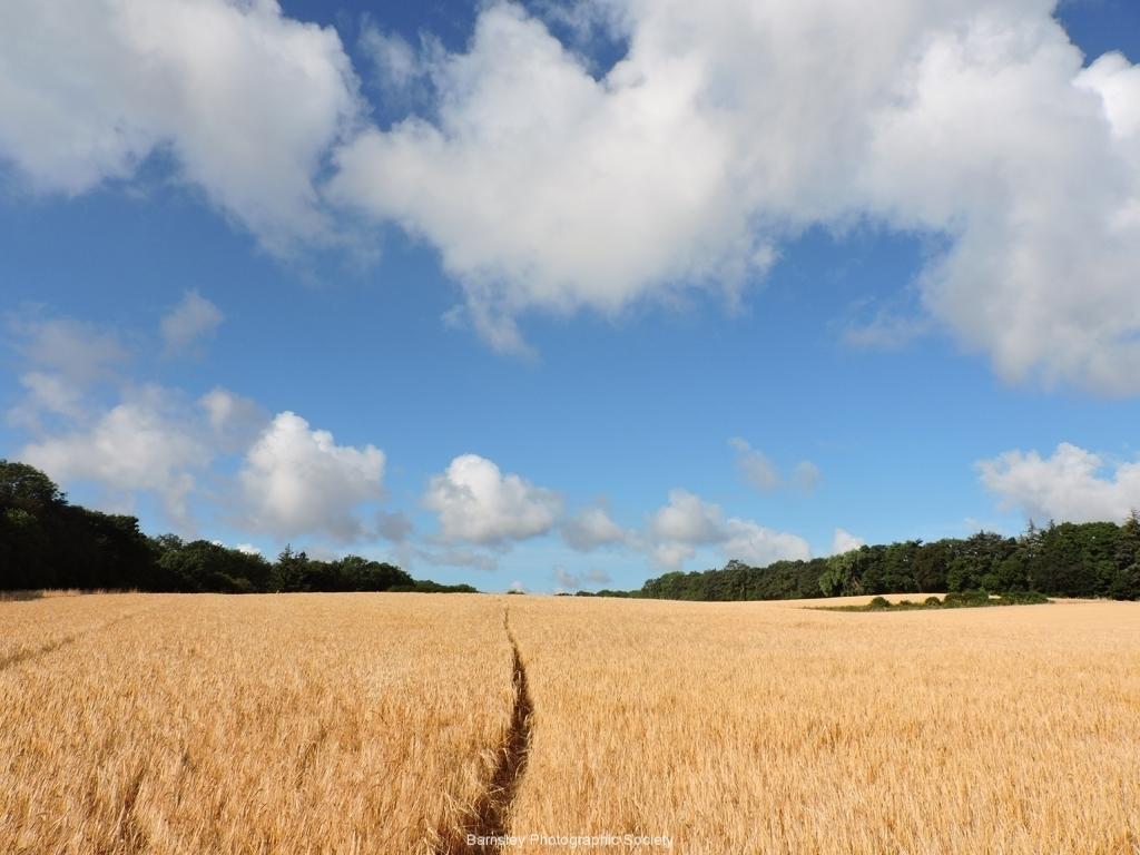 24 FIELD OF DREAMS by Paul Coverdale .jpg