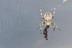 SPIDER-WITH-LUNCH-by-Paul-Coverdale