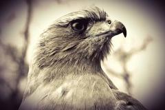 BIRD OF PREY by Reecee Allsopp