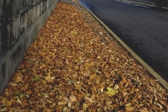 All THE LEAVES ARE BROWN