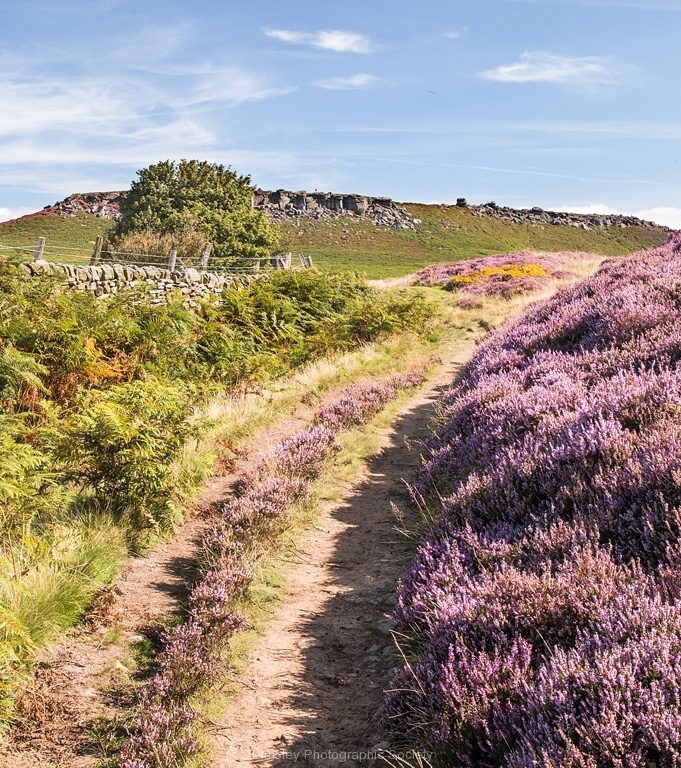 PATH TO HIGGER TOR by Tom Allison