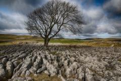 THE LONE TREE  by Willem Van Herp