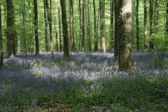 woodlandscape